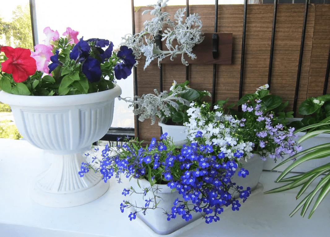 Какие цветы можно посадить на балконе