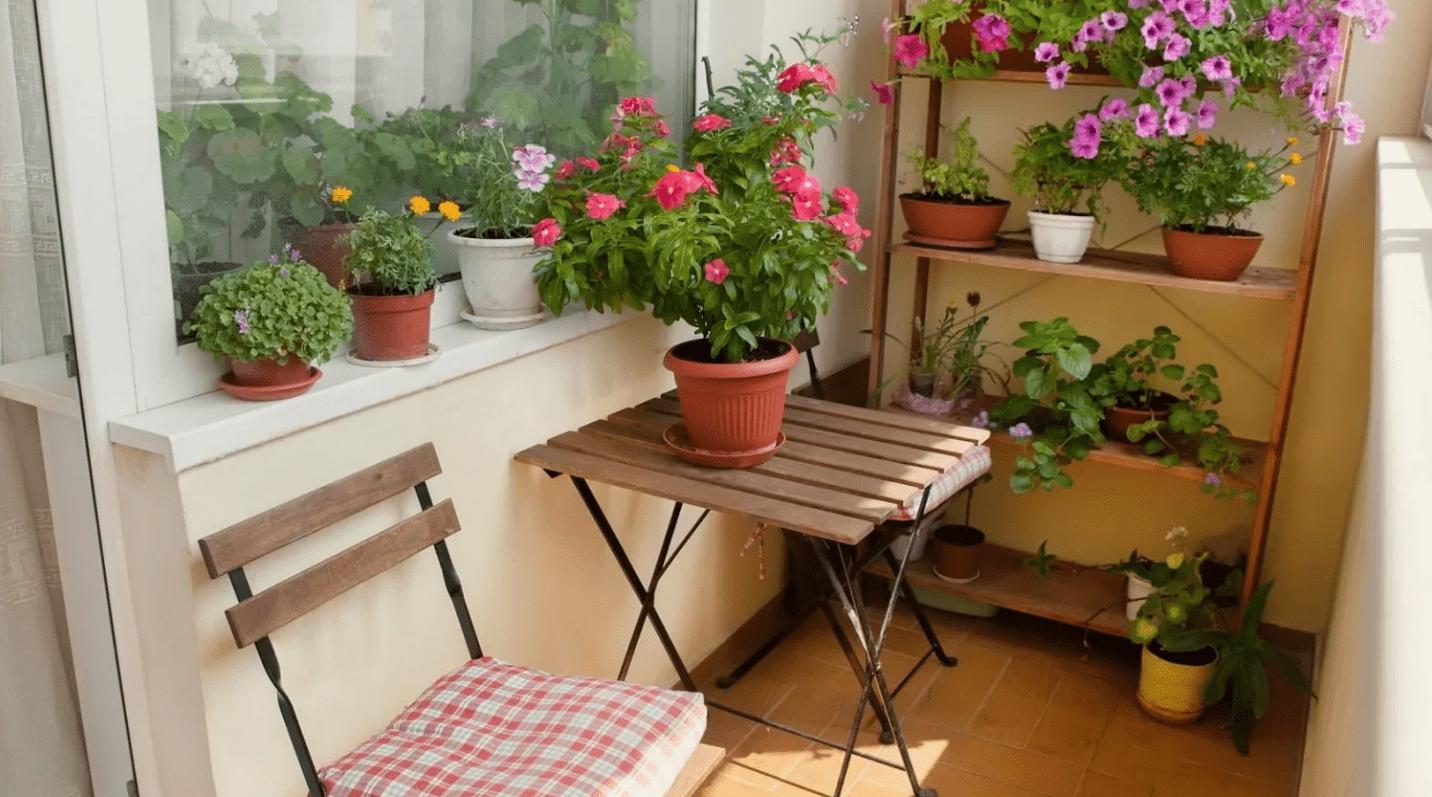 Цветы на северной стороне балкона