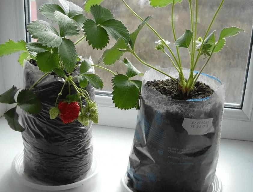 выращивание круглый год