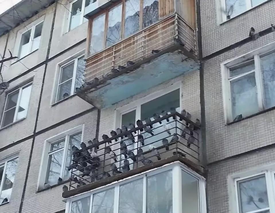 Как избавиться от голубей на балконе. Пошаговая инструкция