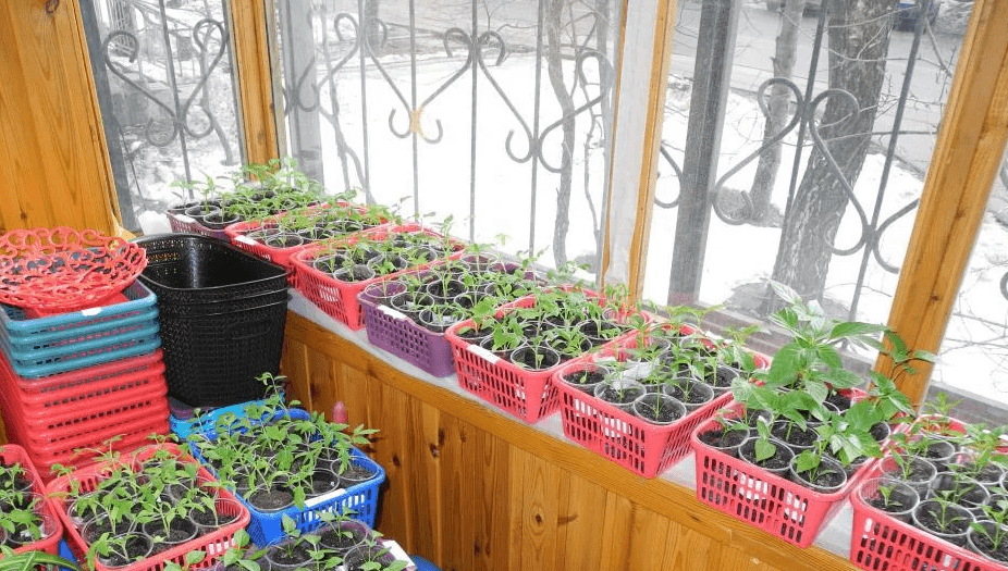 Что можно вырастить на балконе, круглый год, зимой и летом
